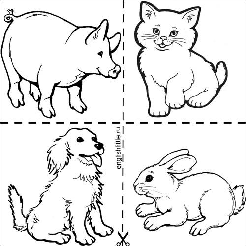 Черно белые картинки животных для детей - смотреть бесплатно 12