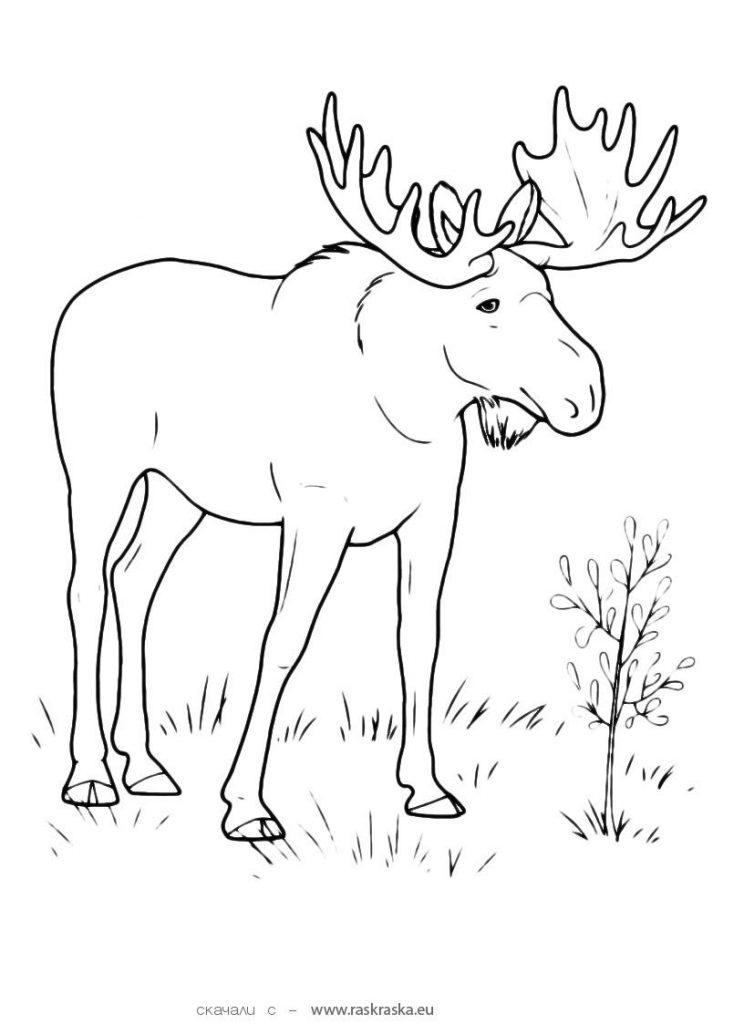 Черно белые картинки животных для детей - смотреть бесплатно 15