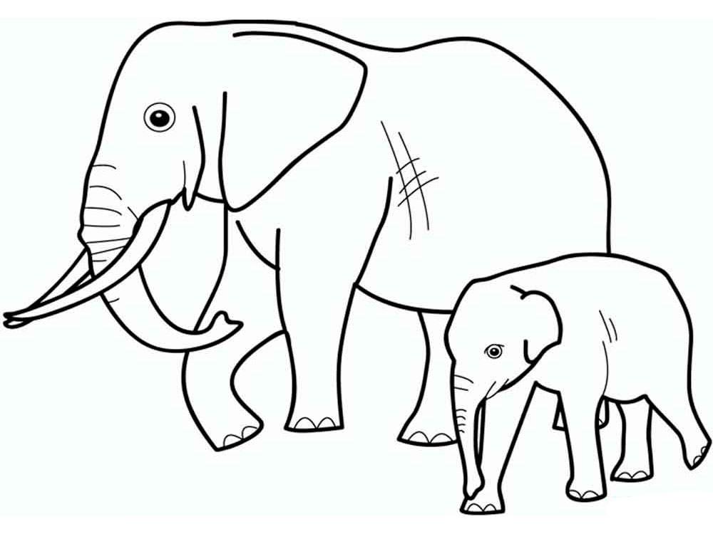 Черно белые картинки животных для детей - смотреть бесплатно 16