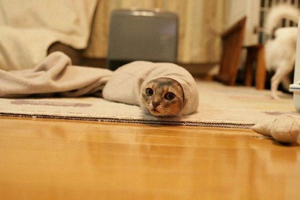 Смешные фото про котов - ржачные, веселые, прикольные 2