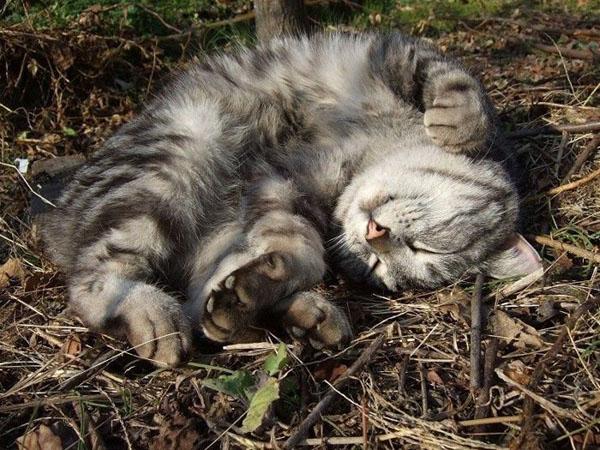 Смешные фото про котов - ржачные, веселые, прикольные 4