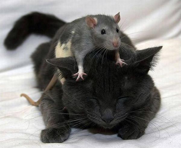 Смешные фото про котов - ржачные, веселые, прикольные 7