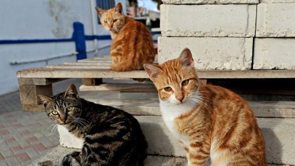Смешные фото про котов - ржачные, веселые, прикольные 15