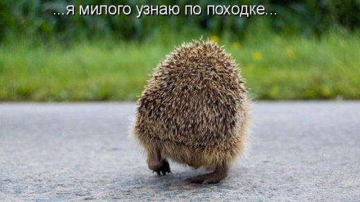 Смотреть смешные картинки про животных с надписями 16