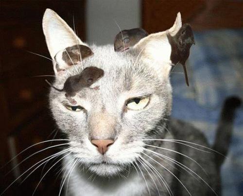 Смешные коты - фото, картинки, ржачные, веселые 4