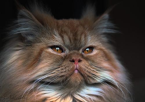 Смешные коты - фото, картинки, ржачные, веселые 1