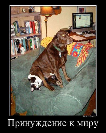 Демотиваторы про животных смешные, прикольные, ржачные 4