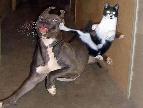 Смешные коты - фото, картинки, ржачные, веселые 6