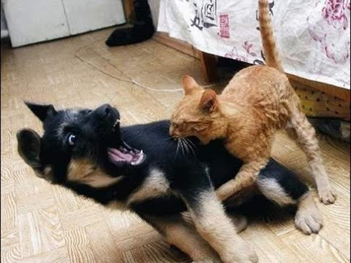 Смешные коты - фото, картинки, ржачные, веселые 10