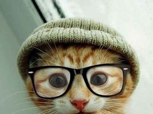 Смешные коты - фото, картинки, ржачные, веселые 11
