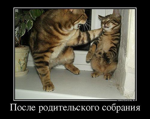 Демотиваторы про животных смешные, прикольные, ржачные 13