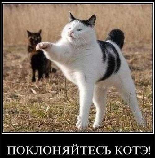 Смешные коты - фото, картинки, ржачные, веселые 15