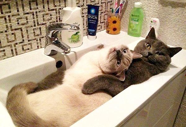 Смешные коты - фото, картинки, ржачные, веселые 16