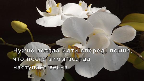 Цитаты про весну и любовь - красивые, удивительные, со смыслом 6