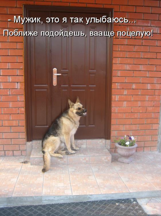 Интересные открытки с собаками с надписями, пятница