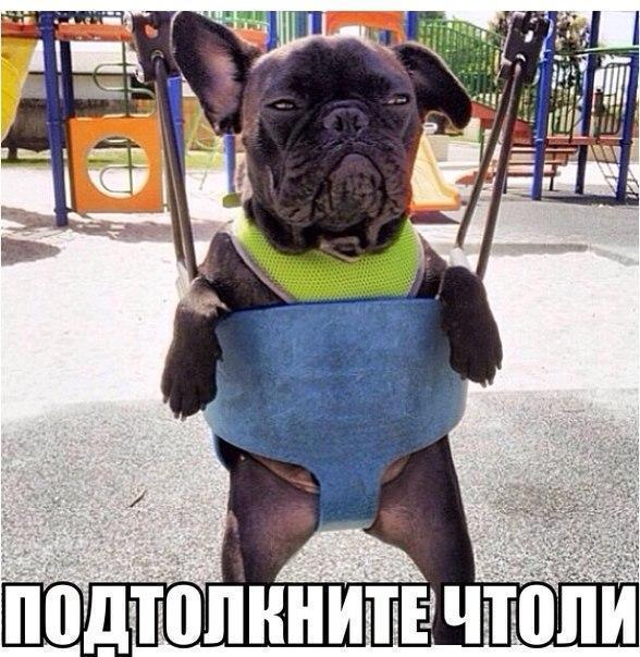 Веселые и смешные фото собак с надписями - смотреть бесплатно 5