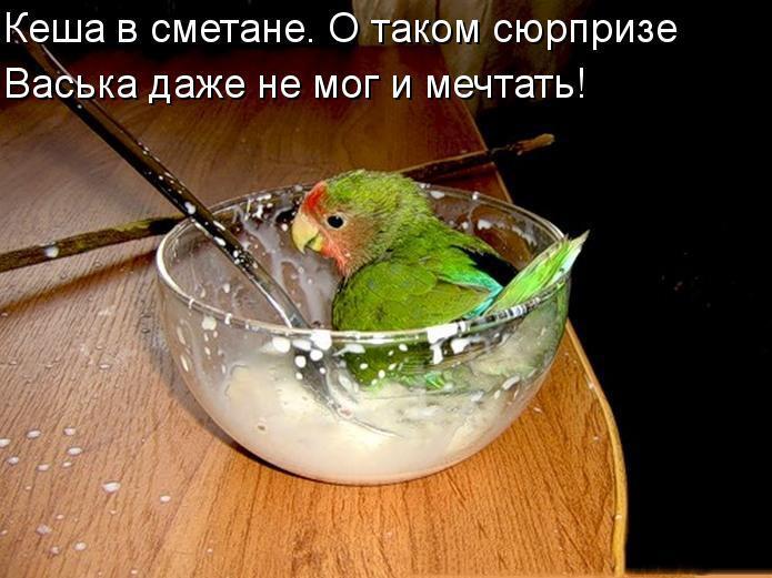 Забавные и смешные фото животных с надписями - смотреть бесплатно 14