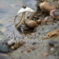 Забавные и смешные фото животных с надписями - смотреть бесплатно 16