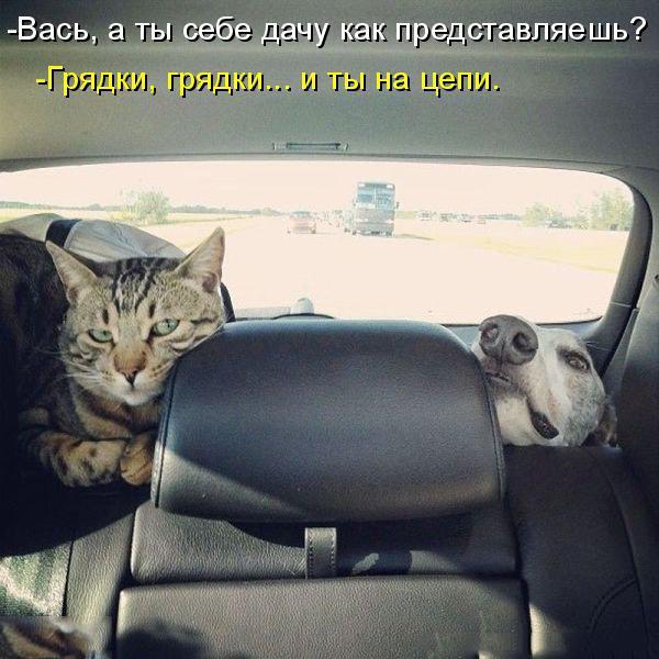 Забавные и смешные фото животных с надписями - смотреть бесплатно 17