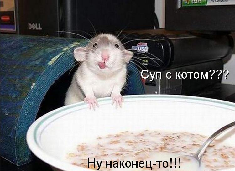 Забавные и смешные фото животных с надписями - смотреть бесплатно 7