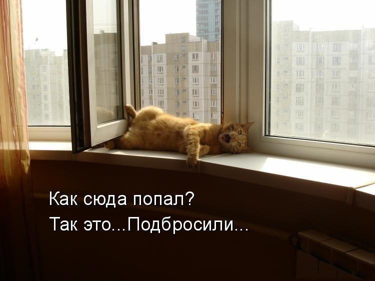 Забавные кошки фото, смешные и ржачные картинки котов 10