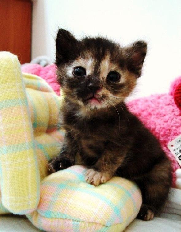 Забавные кошки фото, смешные и ржачные картинки котов 13