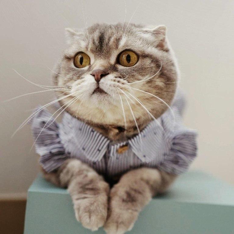 Забавные кошки фото, смешные и ржачные картинки котов 15