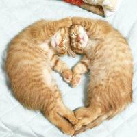 Забавные кошки фото, смешные и ржачные картинки котов 16