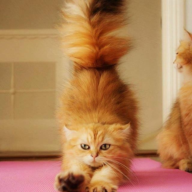 Забавные кошки фото, смешные и ржачные картинки котов 18