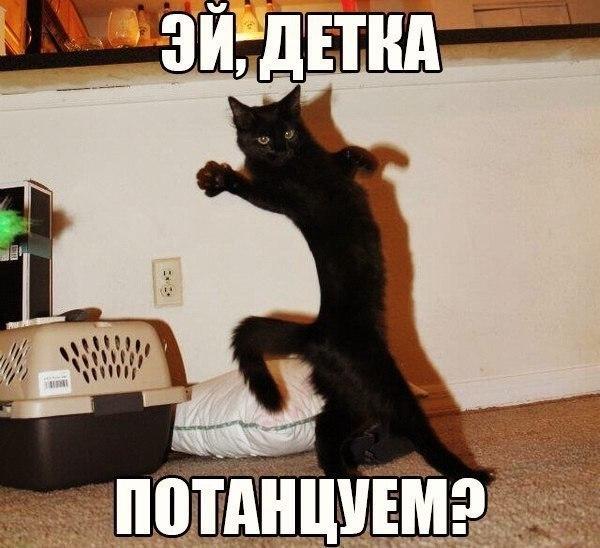 Забавные кошки фото, смешные и ржачные картинки котов 5