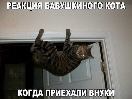 Забавные кошки фото, смешные и ржачные картинки котов 6