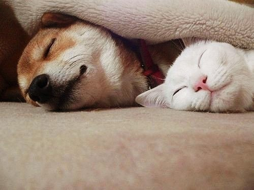 Забавные кошки фото, смешные и ржачные картинки котов 9