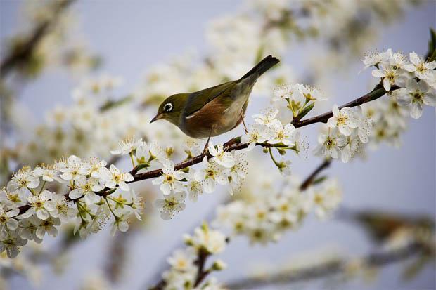 Красивые и удивительные картинки, фото весны - смотреть бесплатно 4