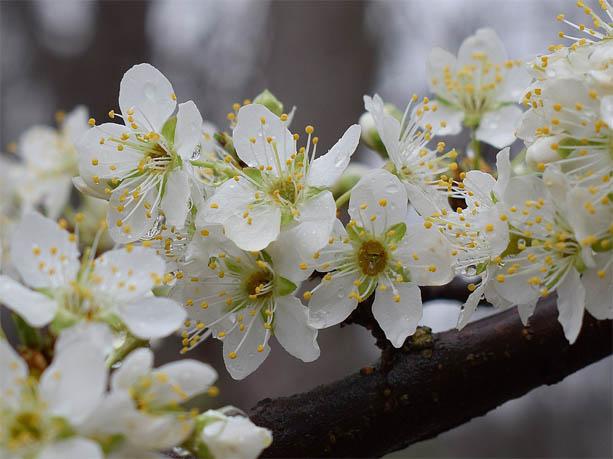 Красивые и удивительные картинки, фото весны - смотреть бесплатно 6