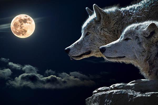 Красивые и удивительные явления природы - смотреть фото 14