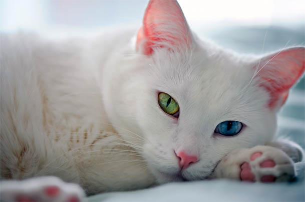 Красивые картинки и фото - белый кот с зелеными глазами 3
