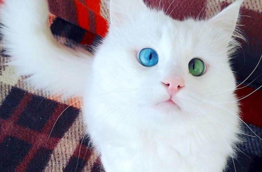Красивые картинки и фото - белый кот с зелеными глазами 4