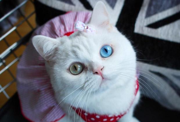 Красивые картинки и фото - белый кот с зелеными глазами 6