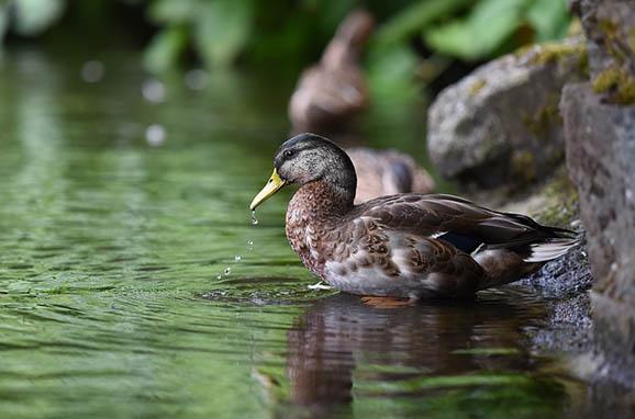 Красивый и удивительный мир природы - картинки, фото, смотреть 17