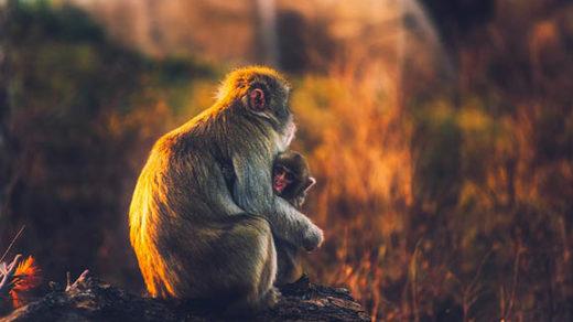 Красивый и удивительный мир природы - картинки, фото, смотреть 4