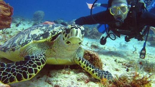 Лучшие места для дайвинга на планете - фото, описание, видео 6