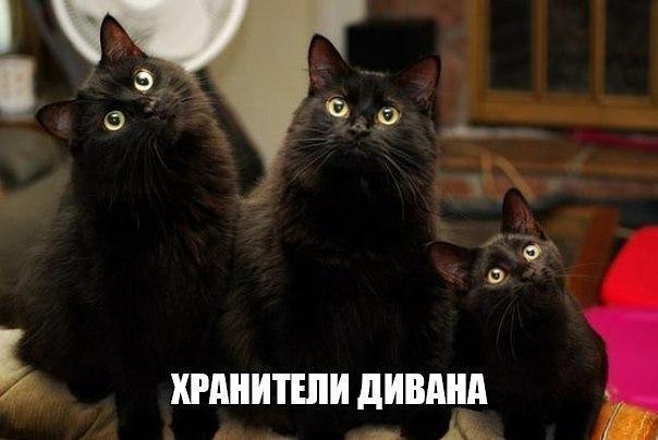 Очень веселые и смешные фото кошек и собак - смотреть бесплатно 11