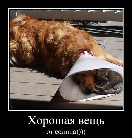Очень веселые и смешные фото кошек и собак - смотреть бесплатно 16