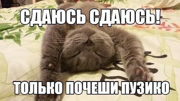 Очень веселые и смешные фото кошек и собак - смотреть бесплатно 2