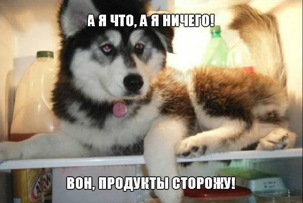 Очень веселые и смешные фото кошек и собак - смотреть бесплатно 9
