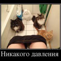 Очень смешные демотиваторы до слез - новые, свежие, 2017 16