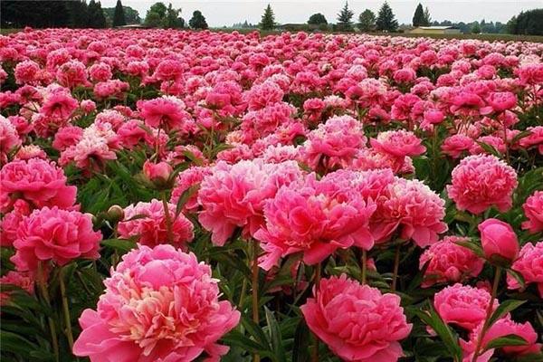 Прекрасная и удивительная красота природы - фото, смотреть бесплатно 9