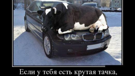 Прикольные и смешные демотиваторы про животных - смотреть онлайн 8