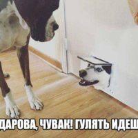 Прикольные и смешные картинки - смотреть бесплатно, онлайн 13