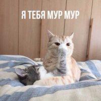 Ржачные и смешные кошки - фото с надписями, до слез, новые 8